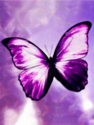 Portrait de butterfly_es