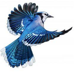 Bild för BlueBird