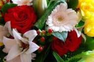 liliak képe