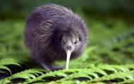 AussieJunkie's picture
