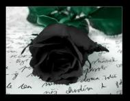 black rose's picture