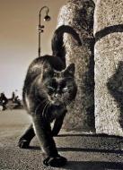gato-nero