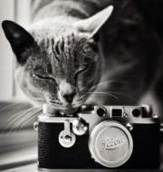 occ.fotografias