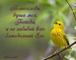 RuslanSolomonof