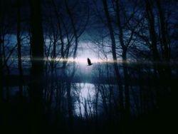 silentsnow
