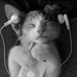 A CAT LİSTENİNG TO MUSİC