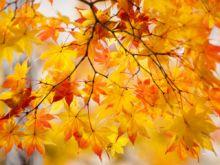 Russian Autumn - 2